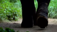 Asian elephants walking on the dirt path at a tourist elephant camp in Thailand