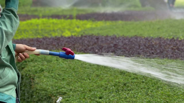 Asian Gardener watering the lawn in park