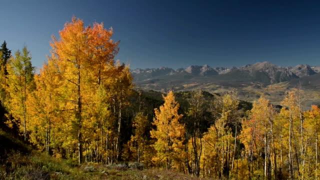 Aspen im Herbst in den Rocky Mountains von Colorado