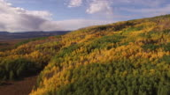 Aspen tree pull back high, Aerial, 4K, 30s, 15of34, Aspen Trees, Foliage, Mountains, Beautiful Colors, Changing leaves, Colorado, Aerial, Stock Video Sale - Drone Discoveries llc 4K Nature/Wildlife/Weather Drone aerial video
