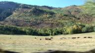 Aspen's horses