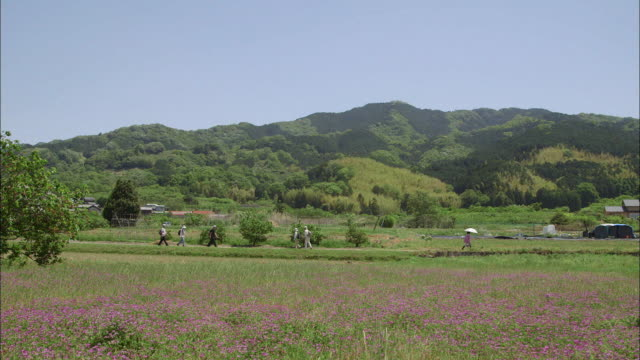 LS. Asutragalus flowers and rural countryside