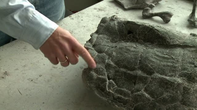 At 215 million years old turtle fossils unearthed in southern Poland are the world's most ancient and complete known remains of their kind and could...
