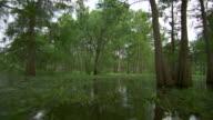 MS POV Atchafalaya Basin swamp drifting through trees / Atchafalaya Basin, Louisiana, United States