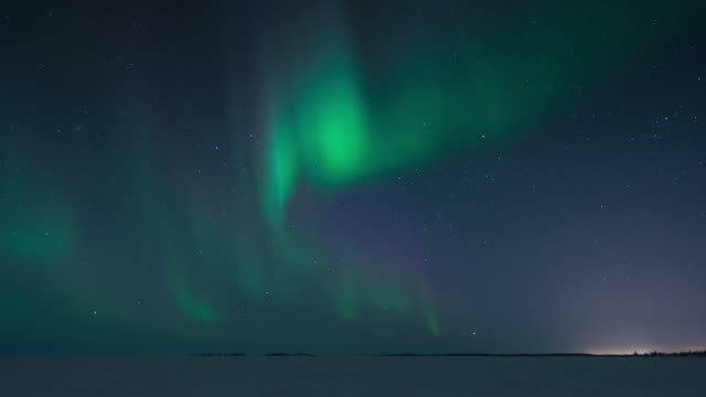 T/L of aurora with trees in forground