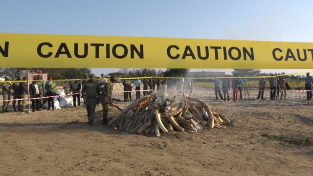 Authorities in Mozambique on Monday burned more than 26 tonnes of ivory and rhino horns confiscated during various anti poaching busts demonstrating...