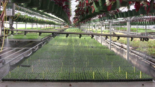 Automated boom waterer in a greenhouse