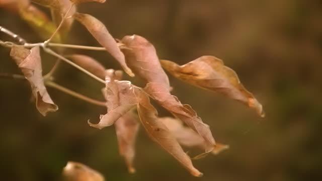 Autumn aspen branch