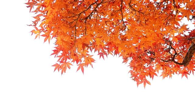 Autumn Background Isolated On White