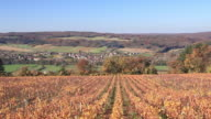 Autumn color in the vineyards near to Vezelay.