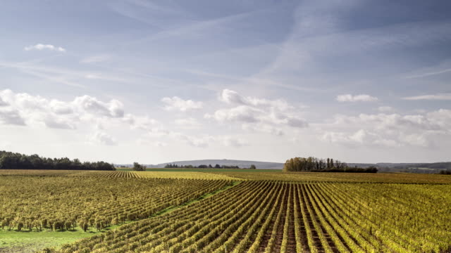 Autumn color in the vineyards of Pouilly-sur-Loire, France.
