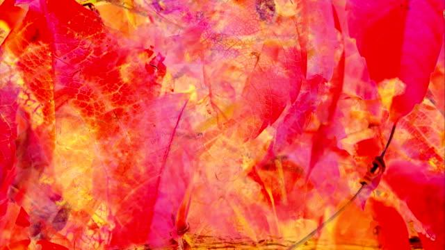 DE andere zet: herfst kleuren, druivenbladeren - levendige (lus)