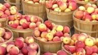 Autumn Farmers Market Apples At Farmers Market on October 27 2013 in Skokie Illinois