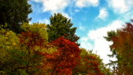 Autumn foliage time lapse with cloudscape in Seattle  usa