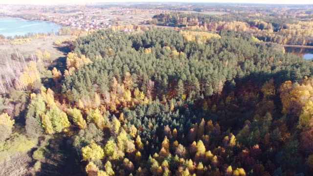 Autumn forest and lake aerial shot