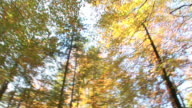TIME LAPSE IN HD: Foresta d'autunno