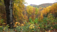 Autumn in the Appalachian Mountains