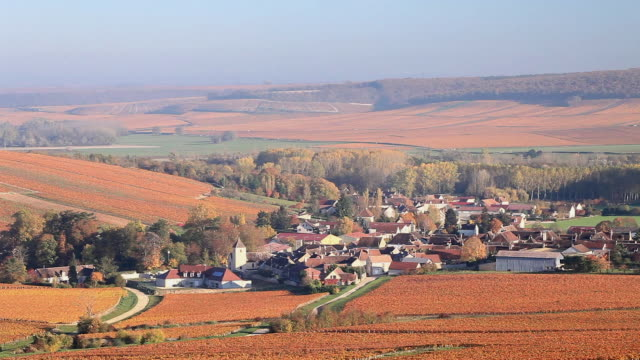 Autumn in the vineyards of Chablis, France.