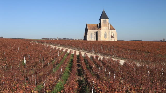 Autumn in the vineyards of Prehy near to Chablis.