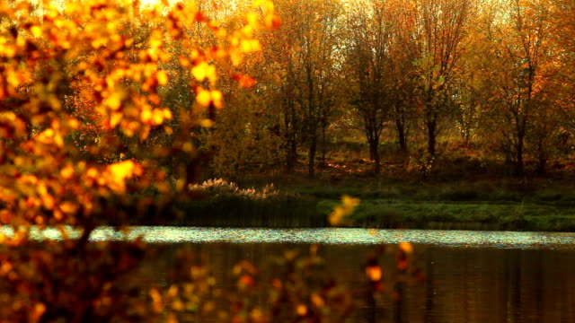 Autumn landscape with lake