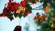 Autumn leaf falling
