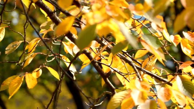 Blatt-Herbstsaison in einem Wald