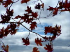 Autumn leaves blowing in the wind. Progressive Frames