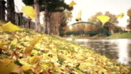 Autumn Leaves Falling On Riverside