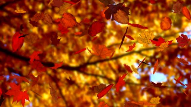Autumn leaves falling (seamless loop) (HD 1080i)