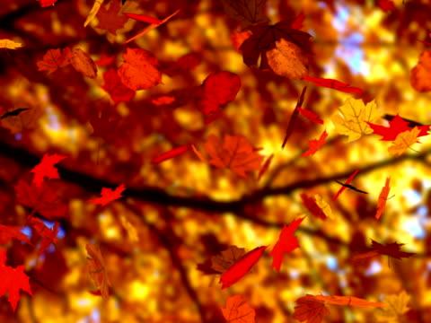 Autumn leaves falling (seamless loop) (NTSC)