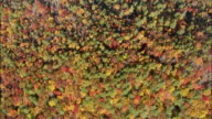 Autumn leaves in a dense forest form a multicolored canopy in the Blue Ridge mountains.