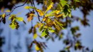 Autunno foglie nella foresta