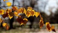 Herfstbladeren bewogen door de wind