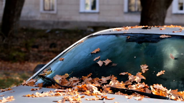 Autumn leaves on the car.