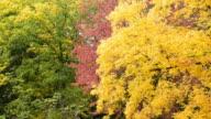 Herbst Blätter eines Baumes Bacground