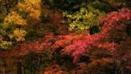 autumn leaves  Souunkyou  Momizidani