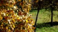 Herfstbladeren beven in de wind