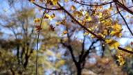 Herfstbladeren beven op wind