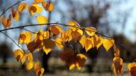 Herfstbladeren met spinnenweb verplaatst door wind