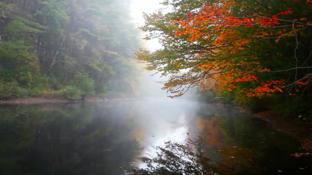 Autumn mist during the peak fall foliage season