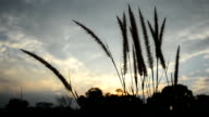 Autumn Tall Grass in the Wind