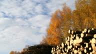 Herbst Zeitraffer