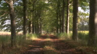 MS Autumn trees lining rural lane / Maldegem, Flandres, Belgium