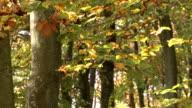 Autumnal deciduous forest