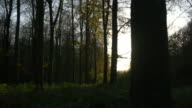 Autumnal forest at dusk