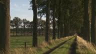 MS Avenue of trees at sunset / Maldegem, Flandres, Belgium