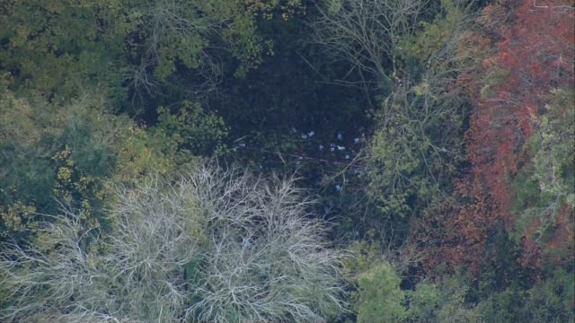 Midair collision between a helicopter and plane in Buckinghamshire AIR VIEW Wreckage in woodland