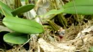 Baby Bird Want Food.