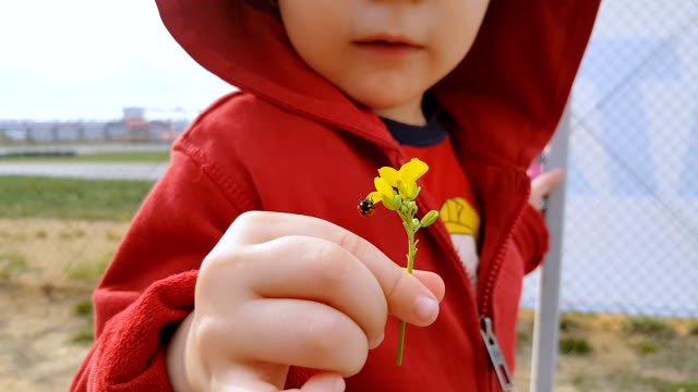 Baby holding a flower with ladybug outdoors