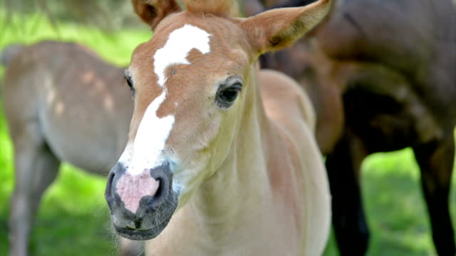 Baby Pferd